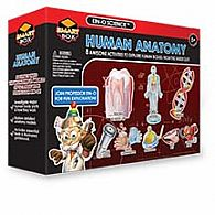 Human Body Anatomy Adventure